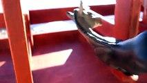 Journée cheval les chevaux jouer neige traditionnel vidéo Breyer Honeyheartsc