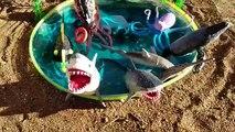 Children Video Shark Toys Learn Learning Names of Sea Animals Kids Park Slide into Mini Po
