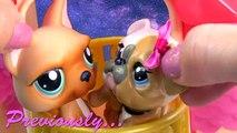 Bébés marier moi moi maman film partie animal de compagnie séries Boutique vidéo Lps mamans 54 littlest lps cookieswi