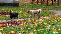 Un et un à un un à et noir chat chien chiens sauvage nez blanc avec | Coupe