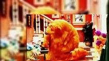Bear in the Big Blue House - Bears Birthday Bash