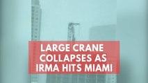 Watch: Large crane collapses as Hurricane Irma hits Miami