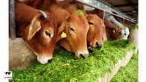 Dairy Farming : How to Start Dairy with 2 Cows - For Farmers & Entrepreneurs -Must Watch