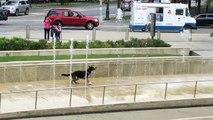 Ce chien adore jouer avec dans une fontaine d'eau !