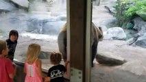 Un ours fait une drôle de blague à des enfants derrière une vitre !