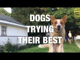 Dogs Trying Their Best and Failing Adorably