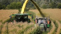 Ogm: Corte Ue dà torto all'Italia, stop coltivazioni solo con rischi certi