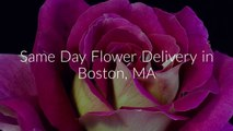 Call @ (617) 858-8018 For Same Day Flower Delivery Boston, MA