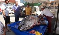 Saros Körfezi'nde Dev Granyöz Balıkçı Ağlarına Takıldı