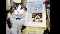 Peut peut chat à venir décès domicile maison allaitement sens le le le le la thérapie qui Oscar Oscar