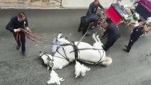 Epuisé, ce cheval qui tirait une calèche avec des mariés s'effondre en pleine chaleur