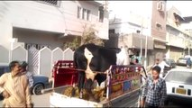 Intelligent Technology Modern Cow   Pig Transportation Mega Machine Carriers Trucks Oversi