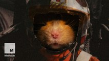 Hamster Wars - It's 'Star Wars' with hamsters
