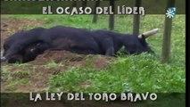 El Ocaso Del Líder, La Ley Del Toro Bravo