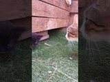 Clever Stray Cat Reveals Her Kittens