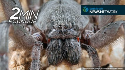 Looking back: The coolest new species of 2017