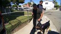 Cesar 911 - S1E4 - Attack Dogs