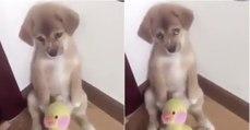 Dono dá raspanete ao cão e a expressão do animal está a derreter a Internet