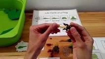 Activités poubelle enfants prendre plaisir pour grenouille amusement amusement dernière vie sensoriel ces Cycle safari ltd