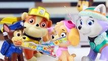 Patrulha Canina, os bebês fazem pirraça com a Everest e Rubble  Português do Brasil