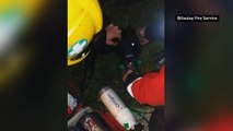 Unconscious Labrador puppy is saved by firefighters