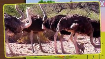 Names and sounds African animals with dinosaurs | Cartoon for kids about wild animals and