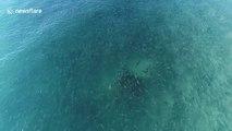 Ce requin nage au milieu d'un banc de poissons qui le fuient en Floride !