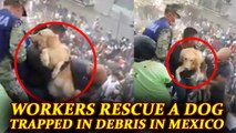 Mexico Earthquake: Viral Video of rescuers saving dog trapped in debris | Oneindia News
