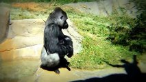 À drôle singes partie le le le le la Zoo |