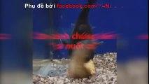 Cá nuốt cá