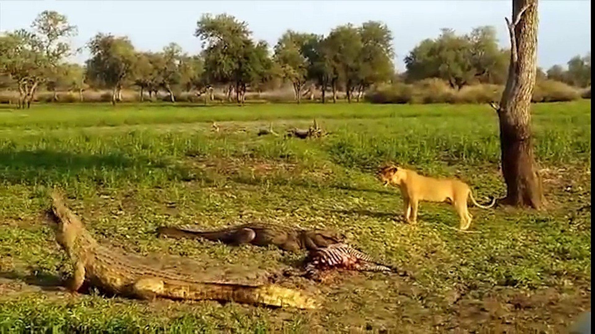 Những trận chiến khốc liệt của những loài vật