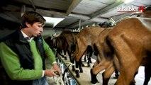 Fête de la gastronomie : au cœur de la fabrication du fromage de chèvre