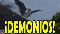 Recopilación videos de demonios reales