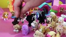 Puppy in my Pocket vs. Kitty In My Pocket - Cats vs. Dogs!