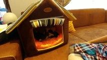 Kedicik alina ve minişleri, minikler artık geziyor, eğlenceli çocuk videosu