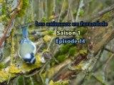 Les animaux en farandole: saison 1:épisode 14