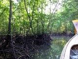 Krabi - Boat to Mangrove Trees & Kanabram Fish Farm, Thailand