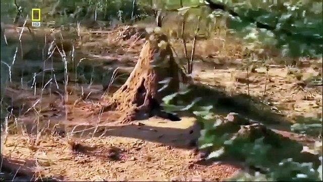Documentary Ant Ants: Natures Secret Power 2 BBC Documentary