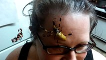 Imagine tu te réveilles et tu as ça sur le front... Araignée géante