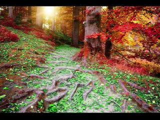 Airborne - Autumn Love - SDC RadioWorks