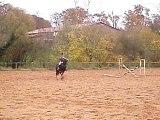 Preda saut vertical au trot
