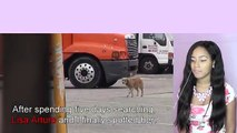 Try Not To Cry: Scared Golden Retriever Dog panics during her rescue - Watch her reion