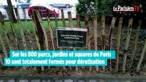 Les rats envahissent Paris