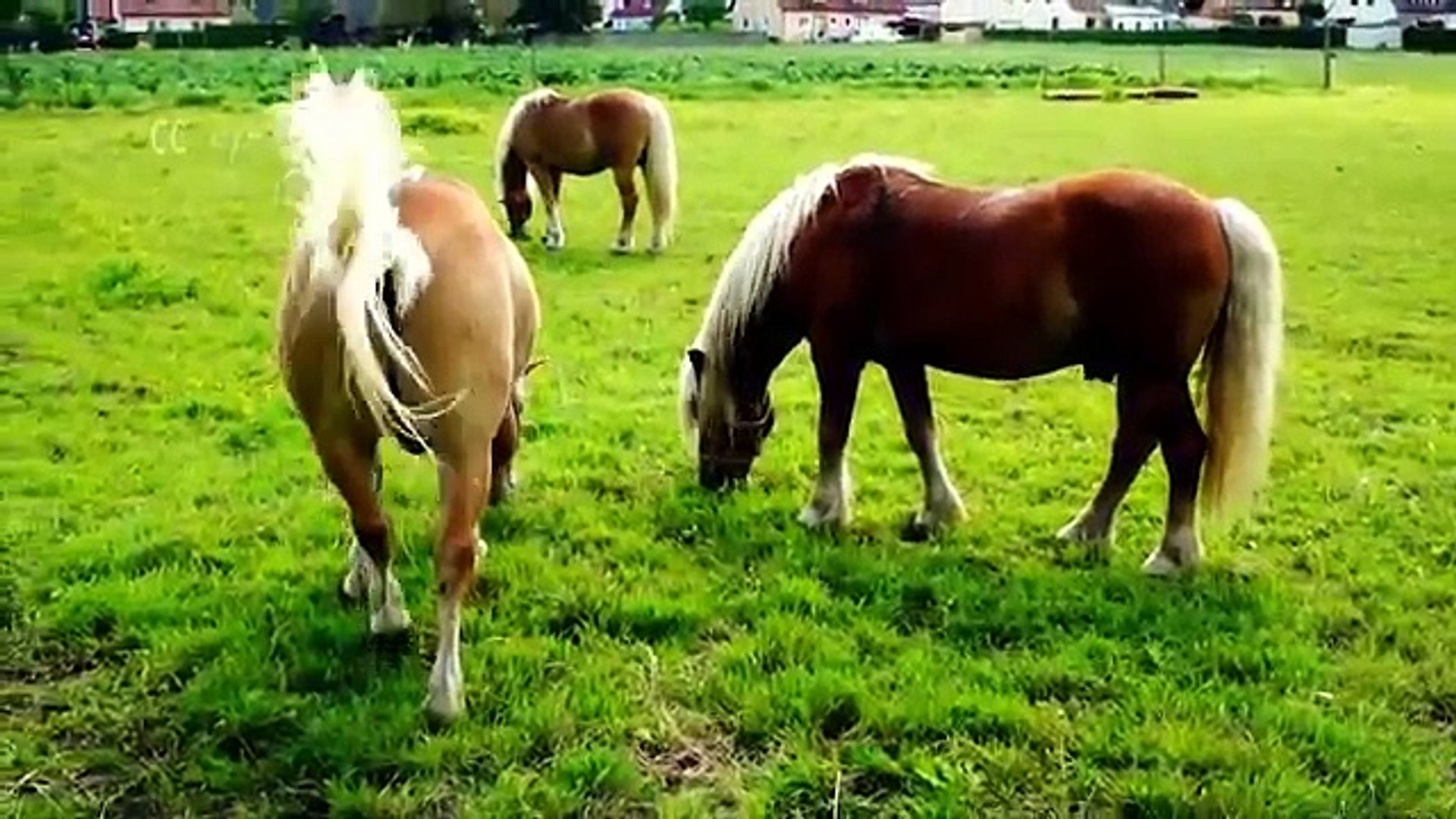 Horse Fs for Kids - Learn about horses for children & horse information | Kiddopedia