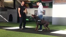 Protection Trained Dogs for Sale UK