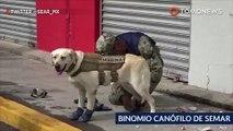 Anjing penyelamat: Frida sang anjing penyelamat dalam gempa Meksiko - TomoNews