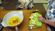 Homemade Dog Treats Pumpkin Apple Pup Cakes Recipe | Snacks with the Snow Dogs 9