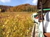ballade en train à travers les vignes suisses