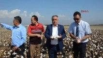 Nazilli'de Tescillenen Pamuk Çeşitleri Çiftçiye Tanıtıldı