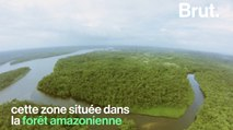 Une partie de la forêt amazonienne sauvé grâce à la population